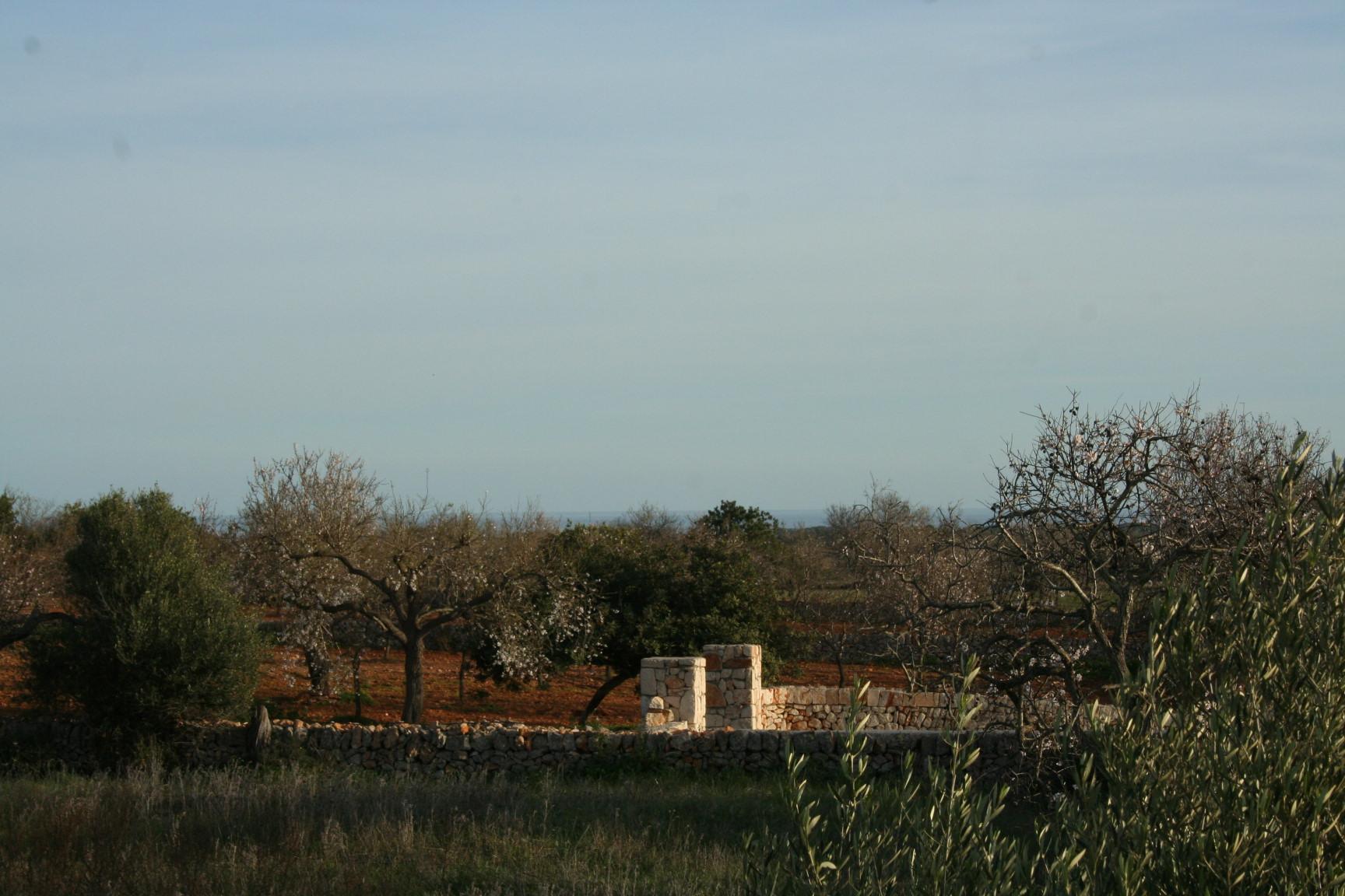 Terreno Alqueria Blanca – Santanyi