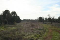 terreno en venta santanyi