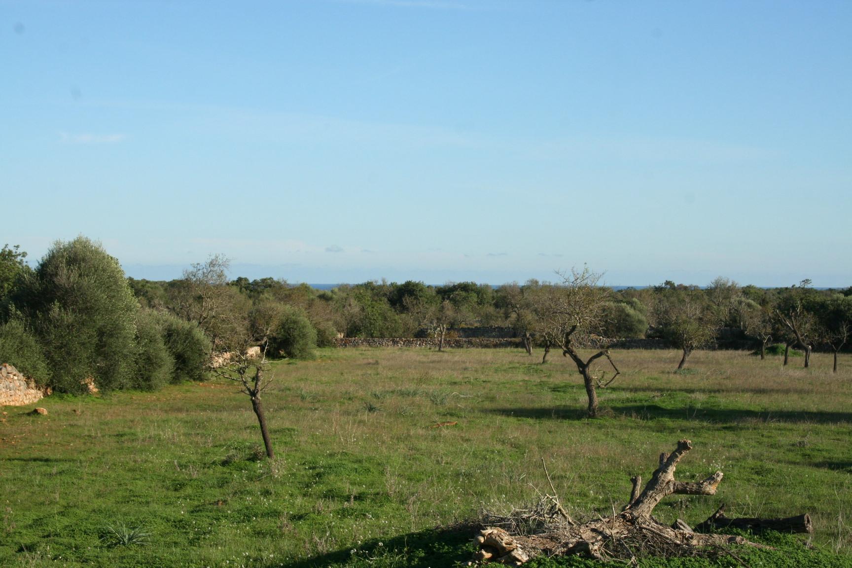 Terreno Santanyi-Alqueria Blanca